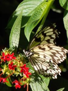 butterfly museum 099