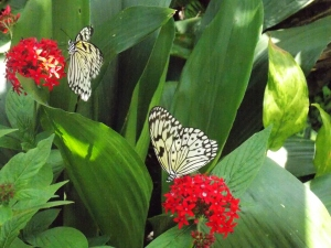 butterfly museum 104